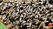 Honig aus Bochum