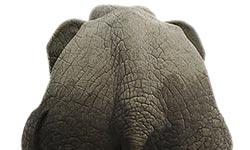 Als ich das sah, was der Elefant fühlte, musste ich mich erstmal setzen!