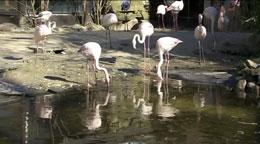 Tierpark-Umbau